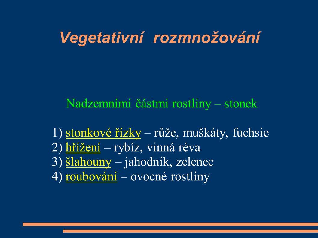 Vegetativní rozmnožování