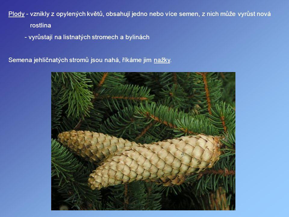 Plody - vznikly z opylených květů, obsahují jedno nebo více semen, z nich může vyrůst nová
