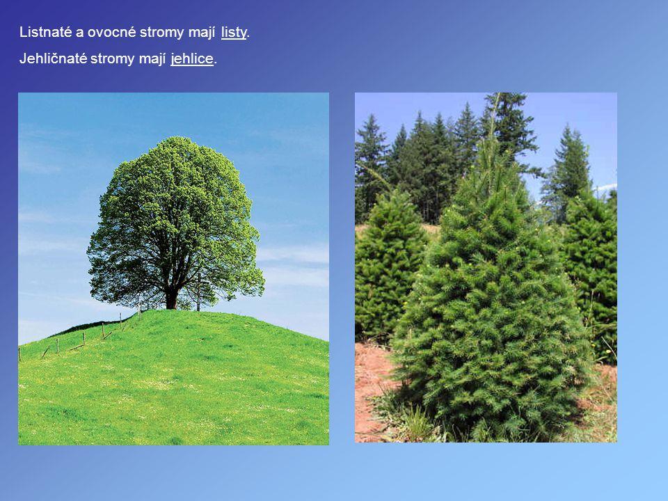 Listnaté a ovocné stromy mají listy.