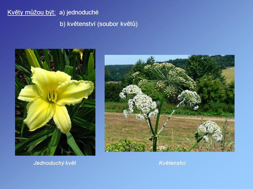 Květy můžou být: a) jednoduché b) květenství (soubor květů)