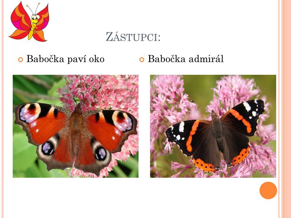Zástupci: Babočka paví oko Babočka admirál
