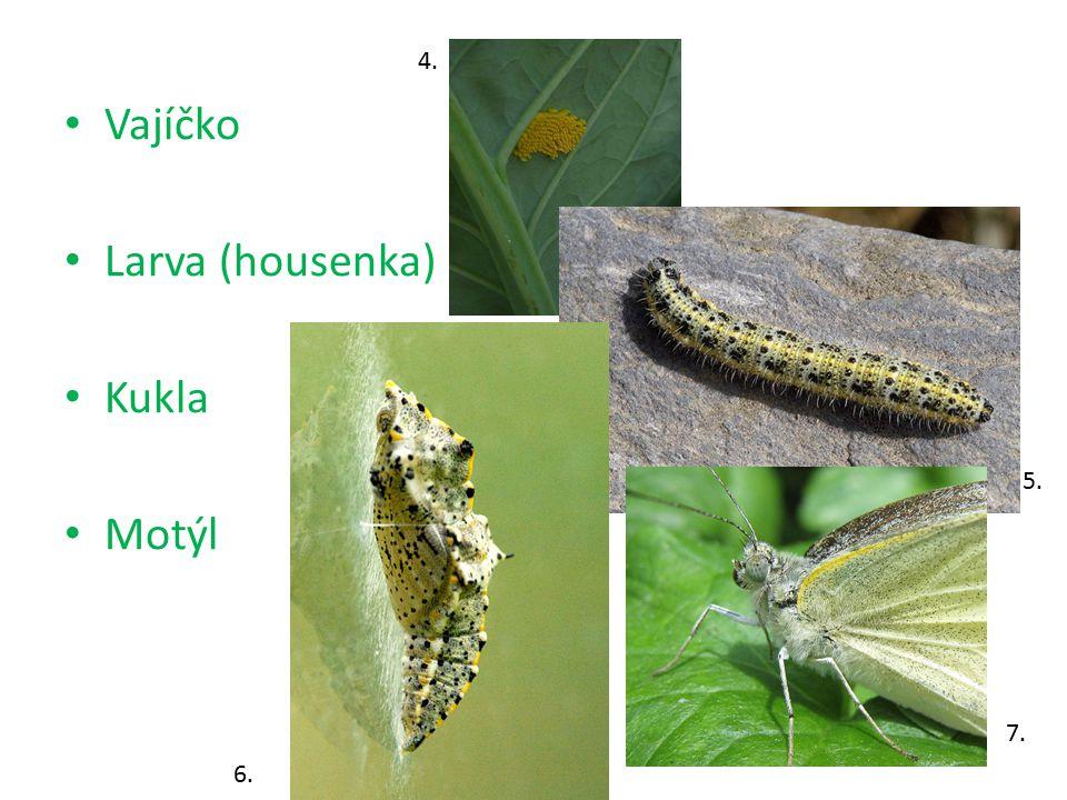 4. Vajíčko Larva (housenka) Kukla Motýl 5. 7. 6.