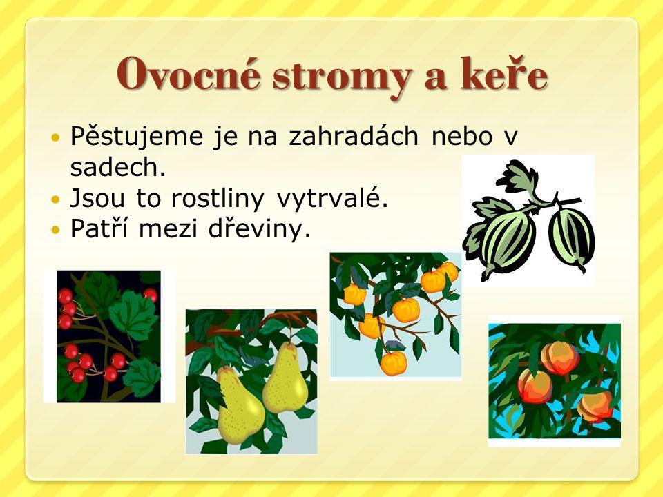 Ovocné stromy a keře Pěstujeme je na zahradách nebo v sadech.