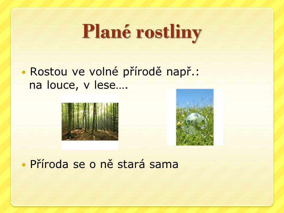 Plané rostliny Rostou ve volné přírodě např.: na louce, v lese….