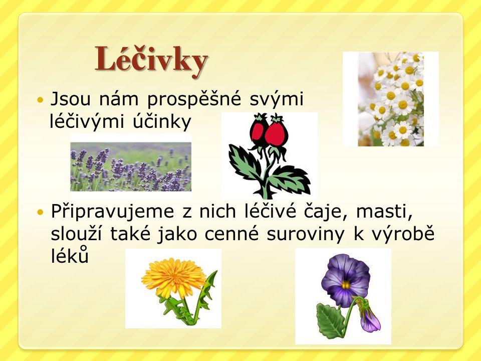 Léčivky Jsou nám prospěšné svými léčivými účinky