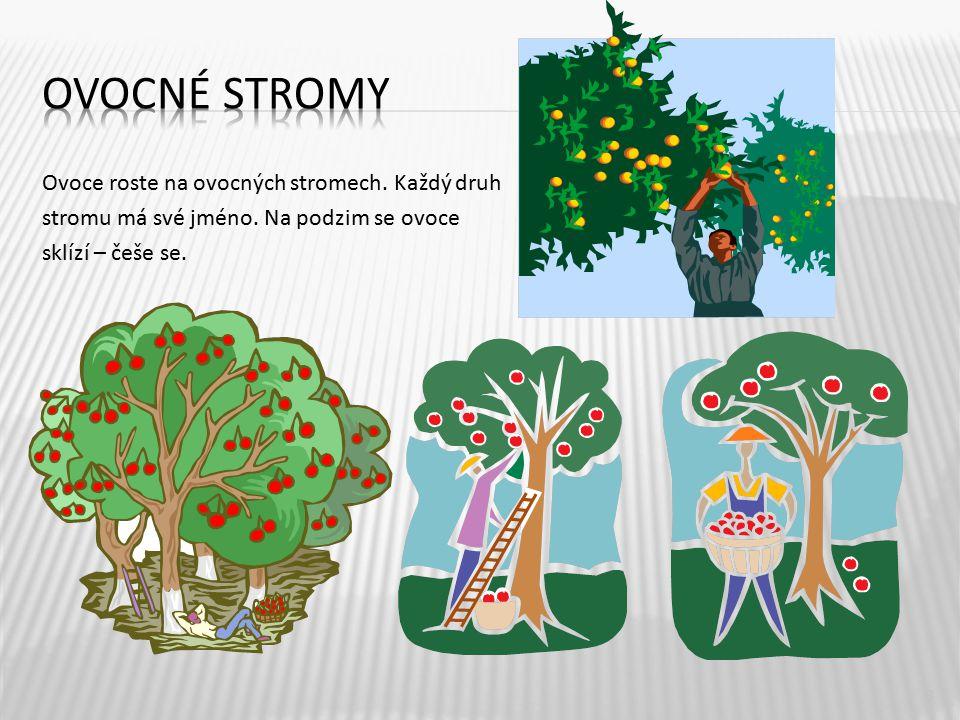 Ovocné stromy Ovoce roste na ovocných stromech. Každý druh stromu má své jméno.