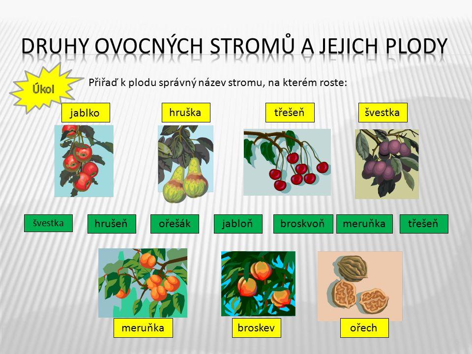 Druhy ovocných stromů a jejich plody