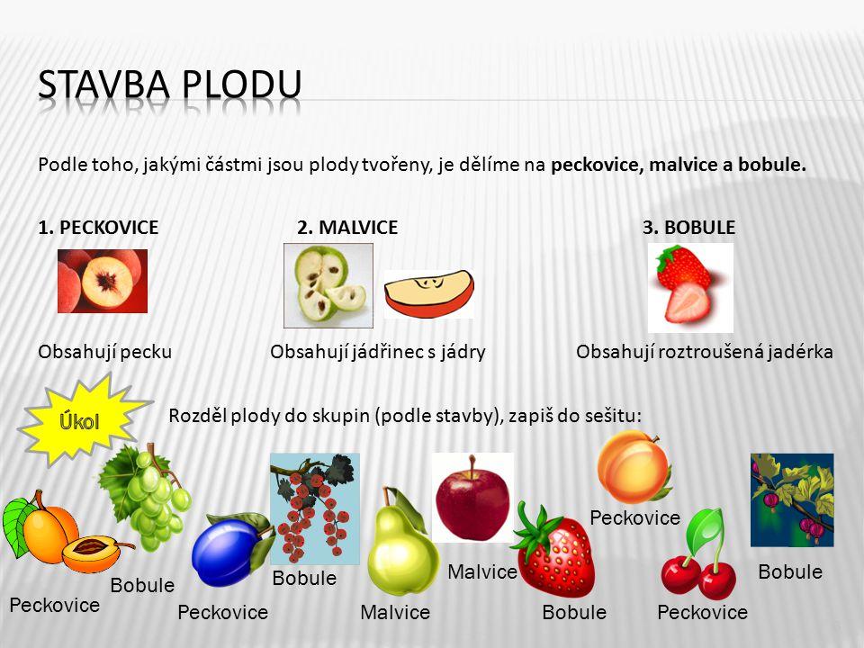 Stavba plodu Podle toho, jakými částmi jsou plody tvořeny, je dělíme na peckovice, malvice a bobule.