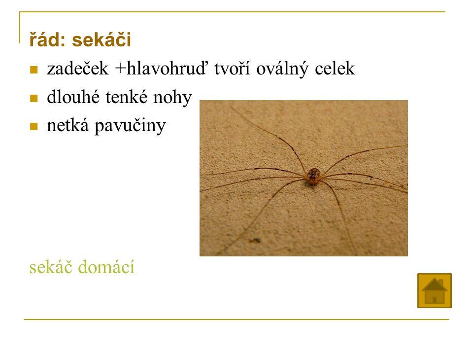 řád: sekáči zadeček +hlavohruď tvoří oválný celek dlouhé tenké nohy netká pavučiny sekáč domácí