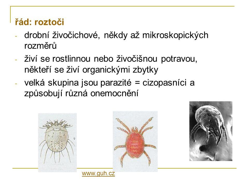 drobní živočichové, někdy až mikroskopických rozměrů