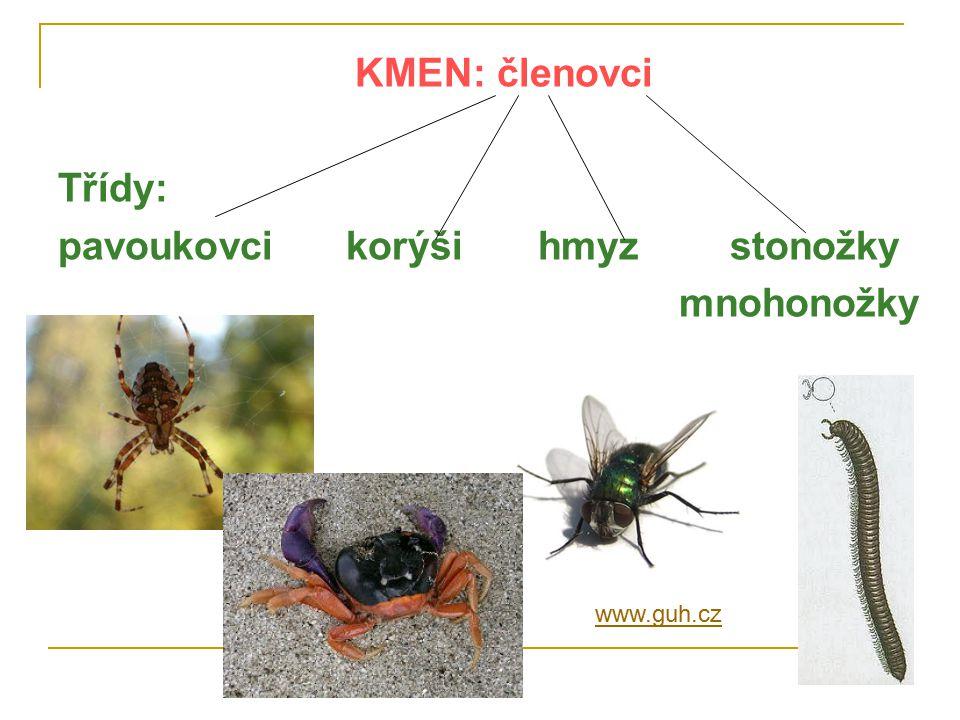 pavoukovci korýši hmyz stonožky mnohonožky