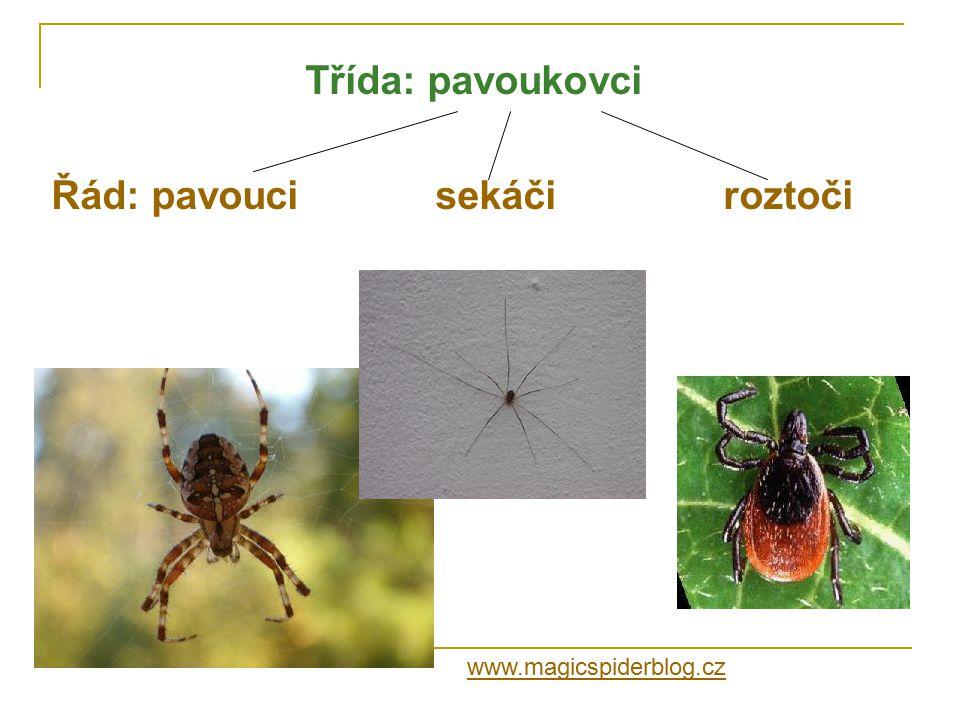 Řád: pavouci sekáči roztoči