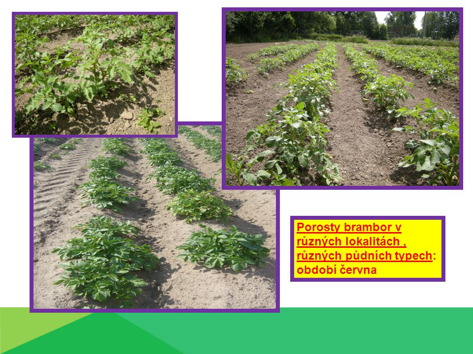 Porosty brambor v různých lokalitách , různých půdních typech: