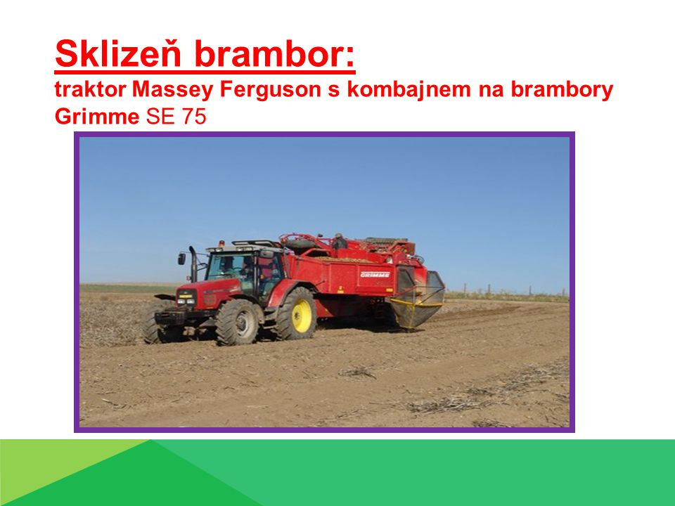 Sklizeň brambor: traktor Massey Ferguson s kombajnem na brambory Grimme SE 75