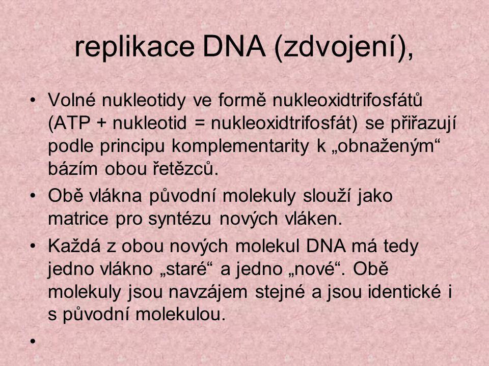 replikace DNA (zdvojení),