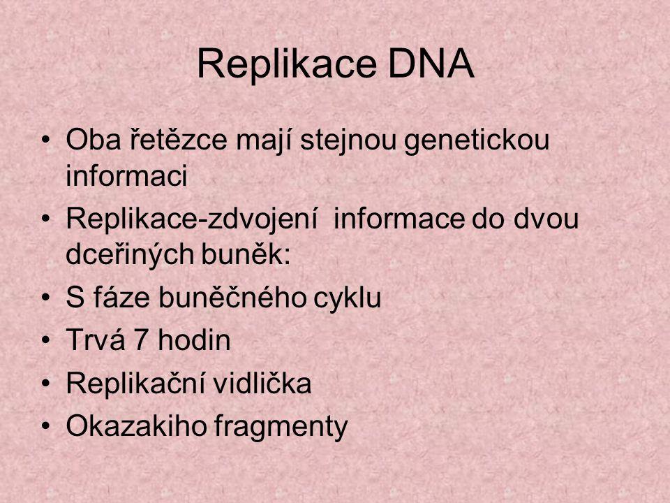 Replikace DNA Oba řetězce mají stejnou genetickou informaci