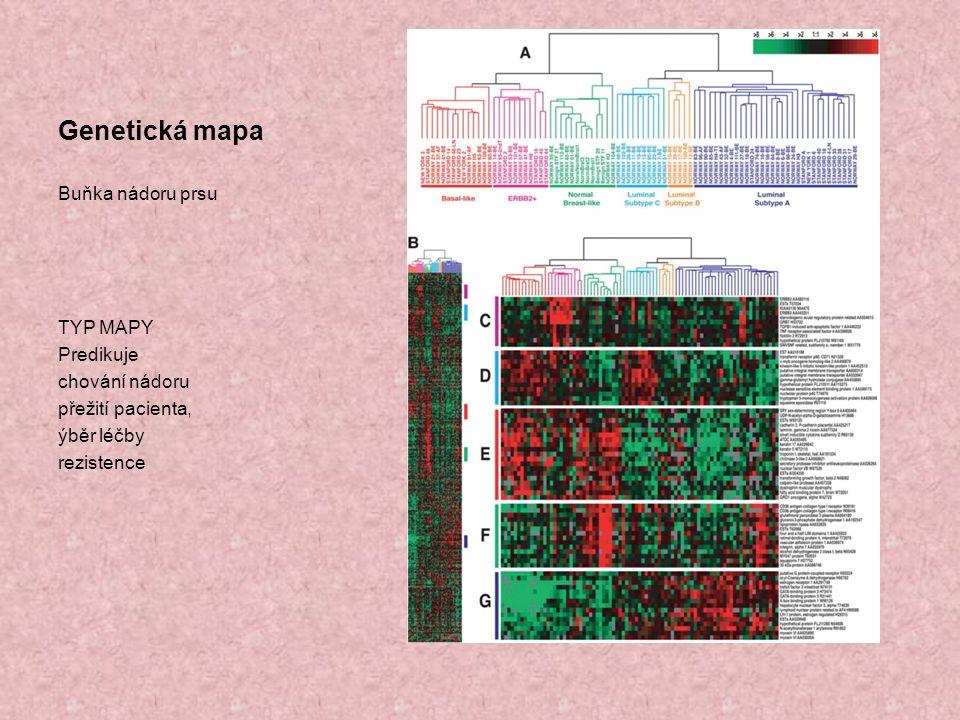 Genetická mapa Buňka nádoru prsu TYP MAPY Predikuje chování nádoru