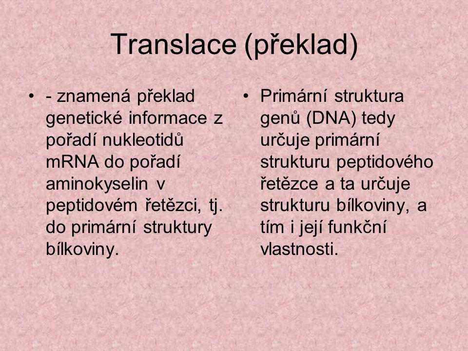 Translace (překlad)