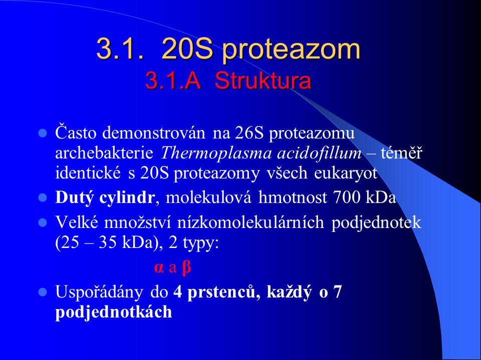 3.1. 20S proteazom 3.1.A Struktura
