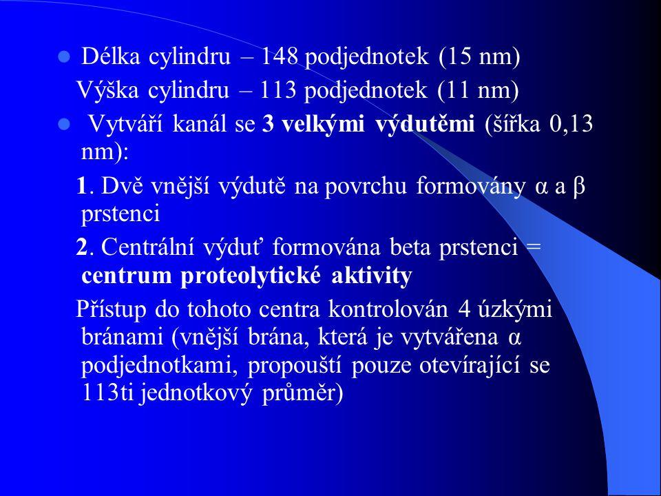 Délka cylindru – 148 podjednotek (15 nm)