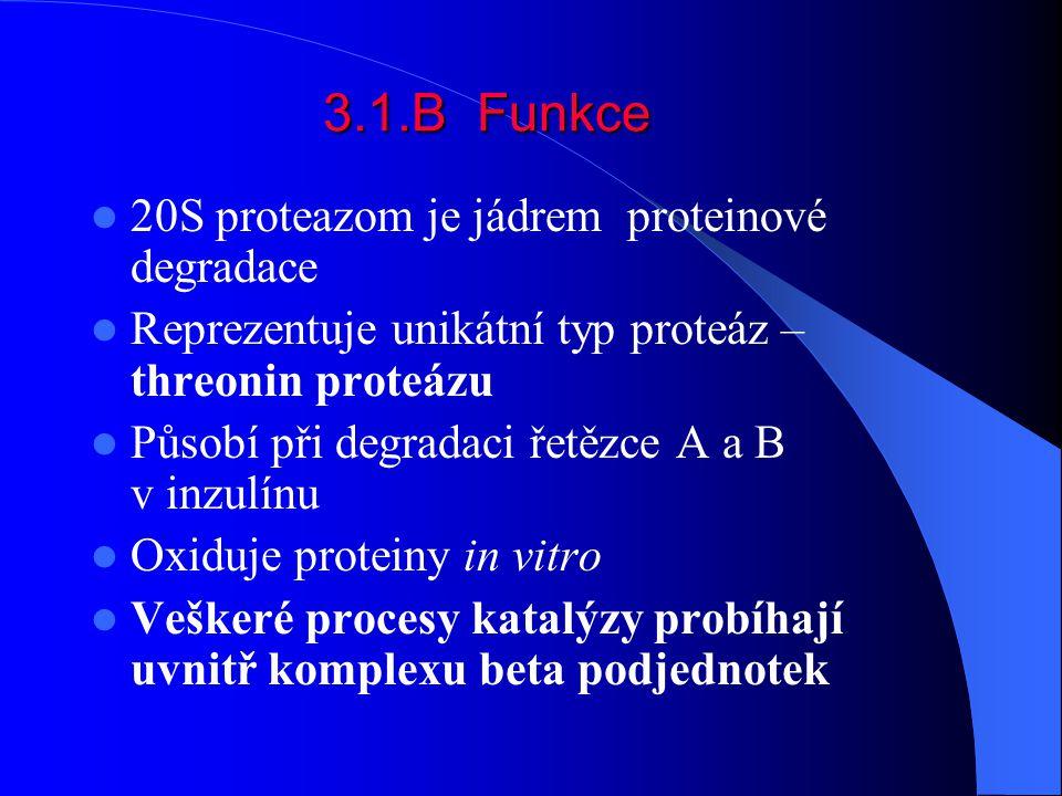 3.1.B Funkce 20S proteazom je jádrem proteinové degradace