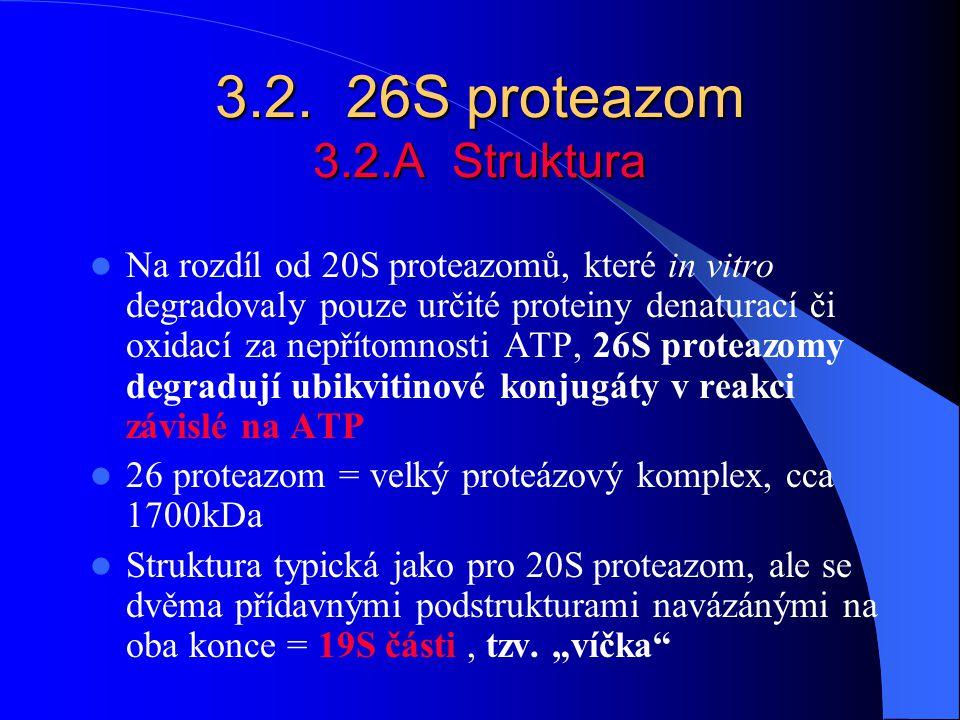 3.2. 26S proteazom 3.2.A Struktura