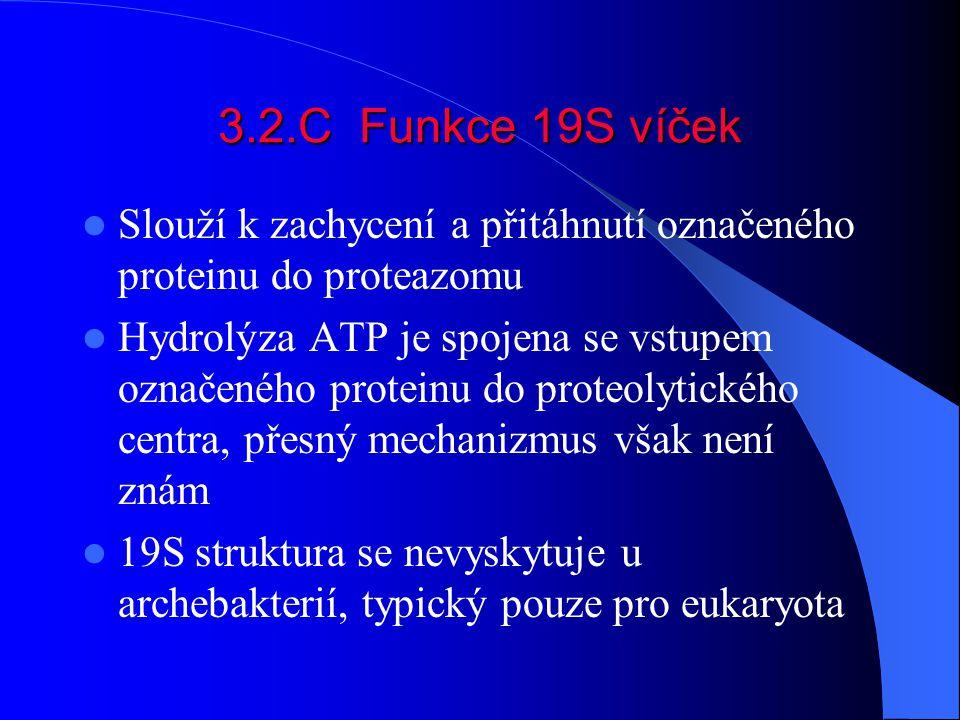 3.2.C Funkce 19S víček Slouží k zachycení a přitáhnutí označeného proteinu do proteazomu.