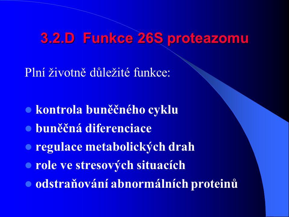 3.2.D Funkce 26S proteazomu Plní životně důležité funkce: