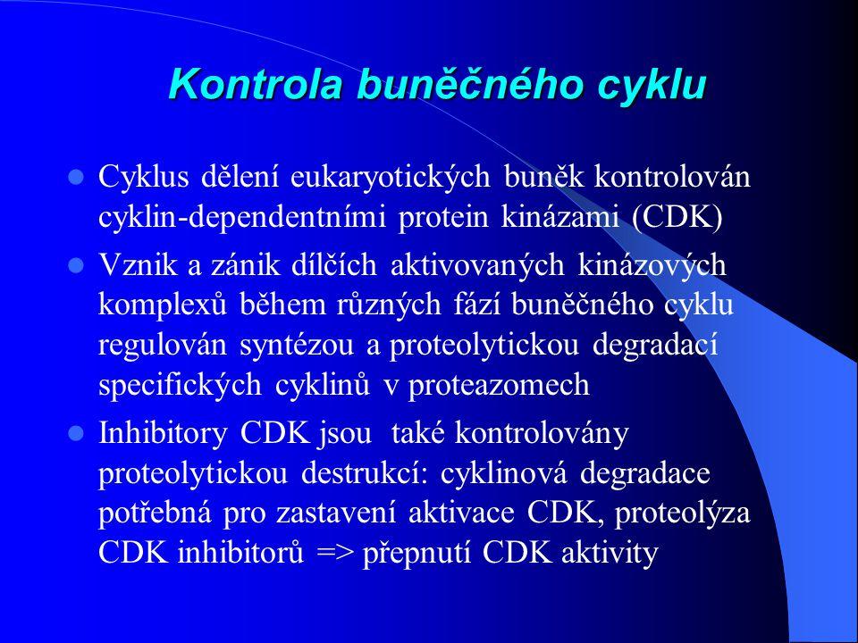 Kontrola buněčného cyklu