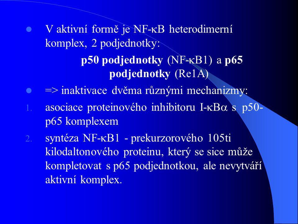p50 podjednotky (NF-B1) a p65 podjednotky (Re1A)