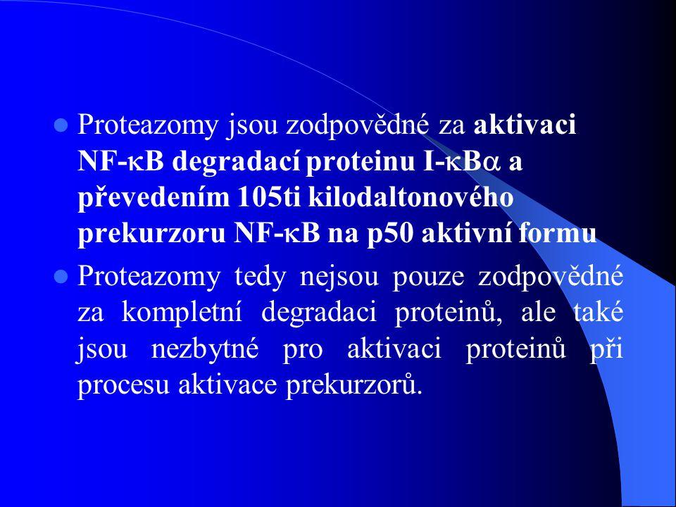 Proteazomy jsou zodpovědné za aktivaci NF-B degradací proteinu I-B a převedením 105ti kilodaltonového prekurzoru NF-B na p50 aktivní formu