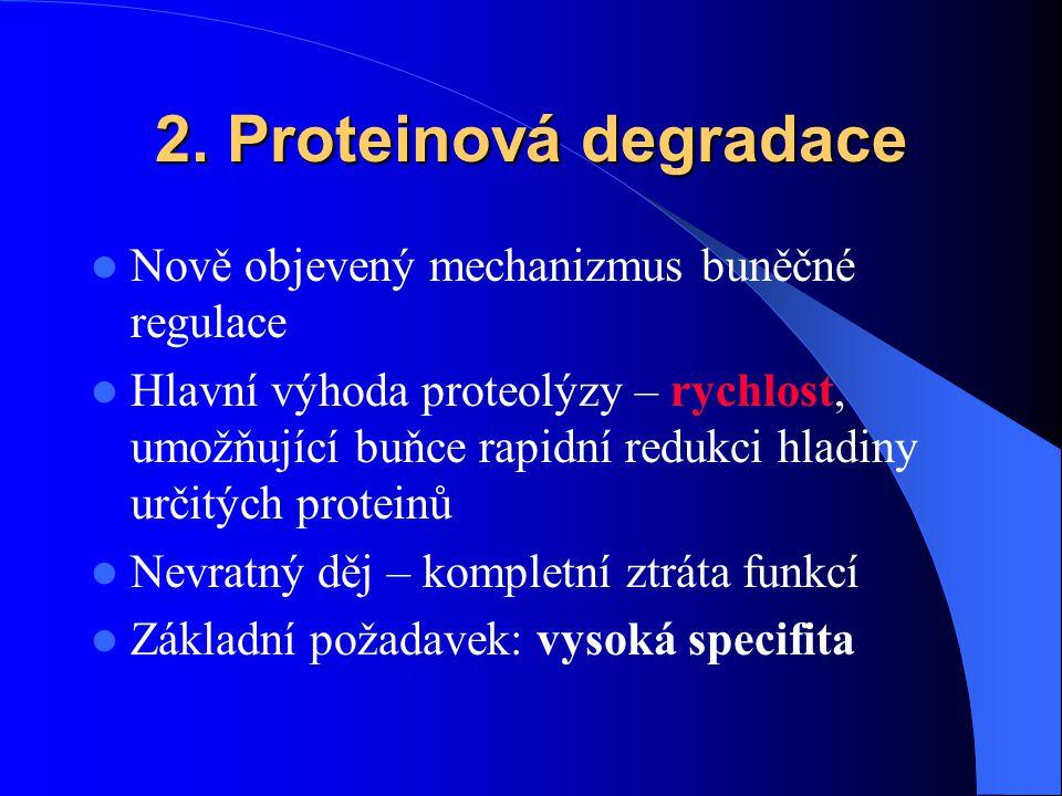 2. Proteinová degradace Nově objevený mechanizmus buněčné regulace