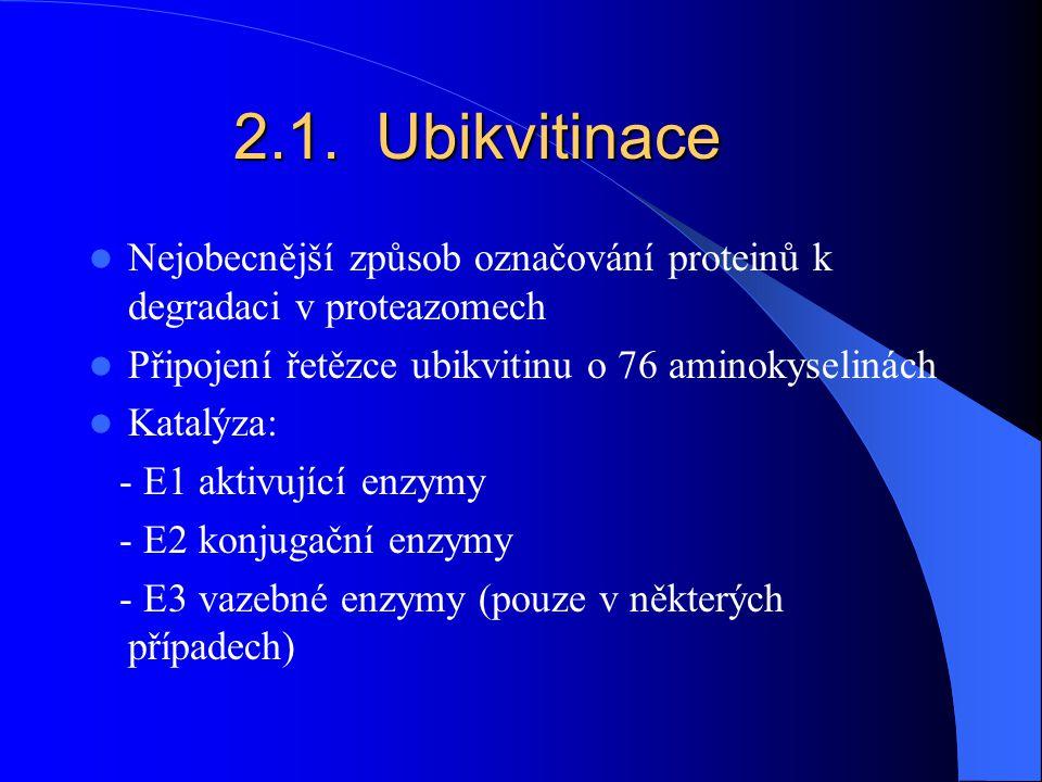 2.1. Ubikvitinace Nejobecnější způsob označování proteinů k degradaci v proteazomech. Připojení řetězce ubikvitinu o 76 aminokyselinách.