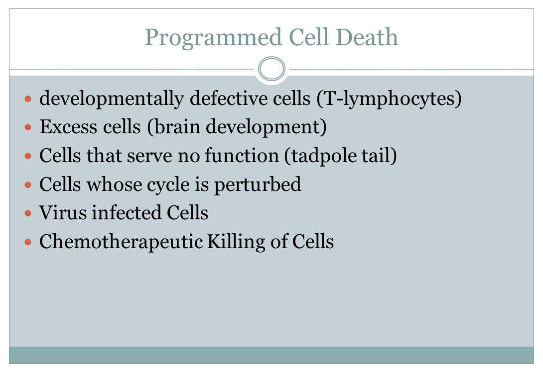 Programmed Cell Death developmentally defective cells (T-lymphocytes)