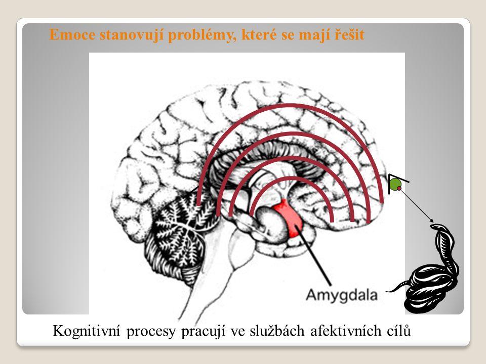 Emoce stanovují problémy, které se mají řešit