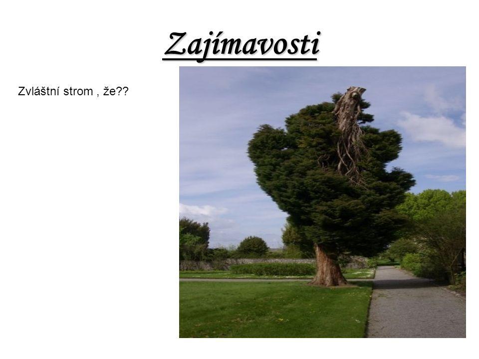 Zajímavosti Zvláštní strom , že