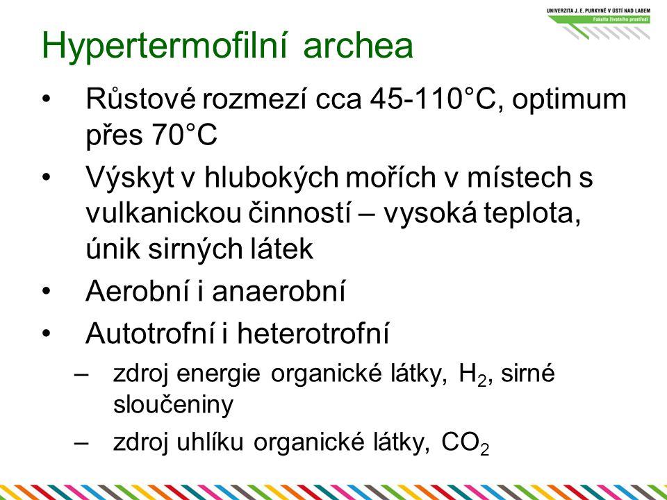 Hypertermofilní archea