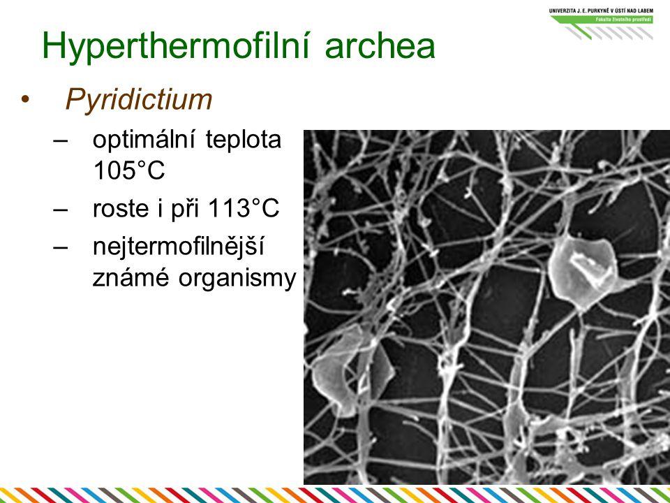 Hyperthermofilní archea