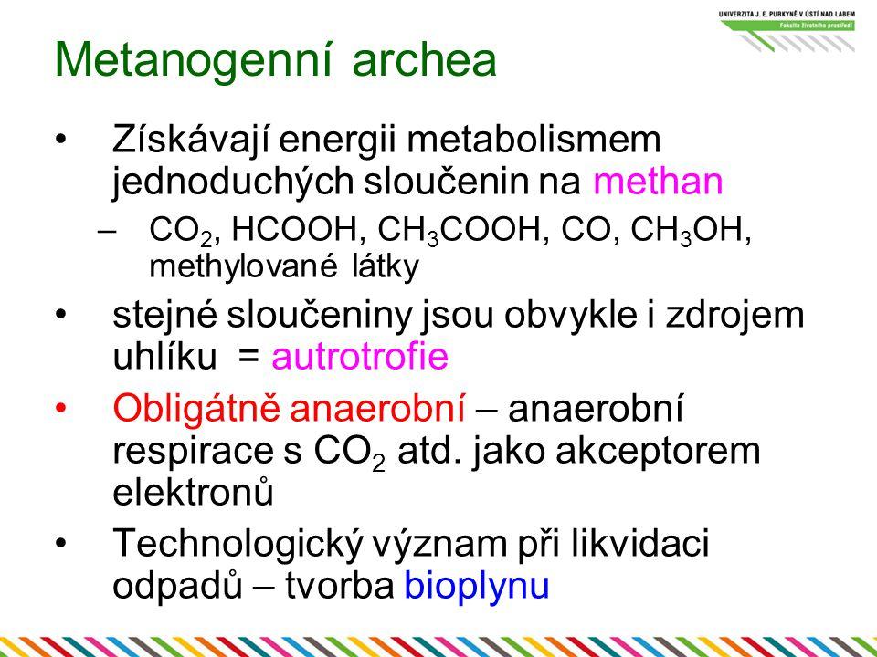 Metanogenní archea Získávají energii metabolismem jednoduchých sloučenin na methan. CO2, HCOOH, CH3COOH, CO, CH3OH, methylované látky.