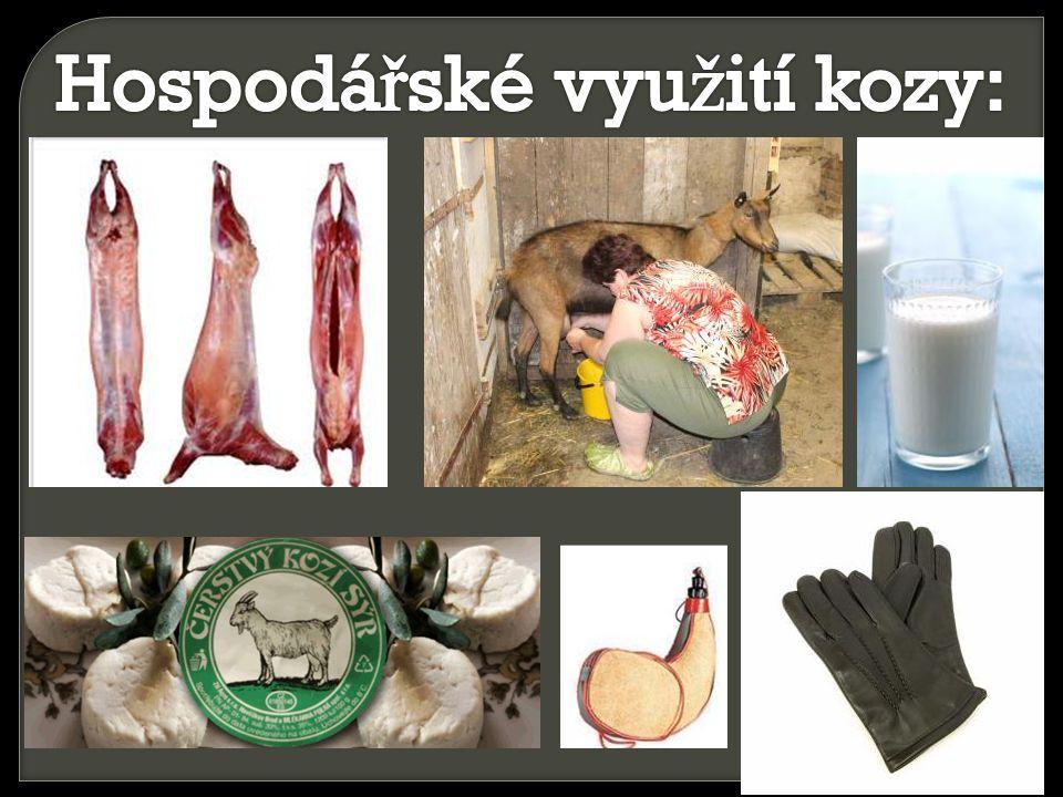 Hospodářské využití kozy:
