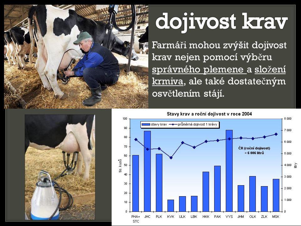 dojivost krav Farmáři mohou zvýšit dojivost krav nejen pomocí výběru správného plemene a složení krmiva, ale také dostatečným osvětlením stájí.