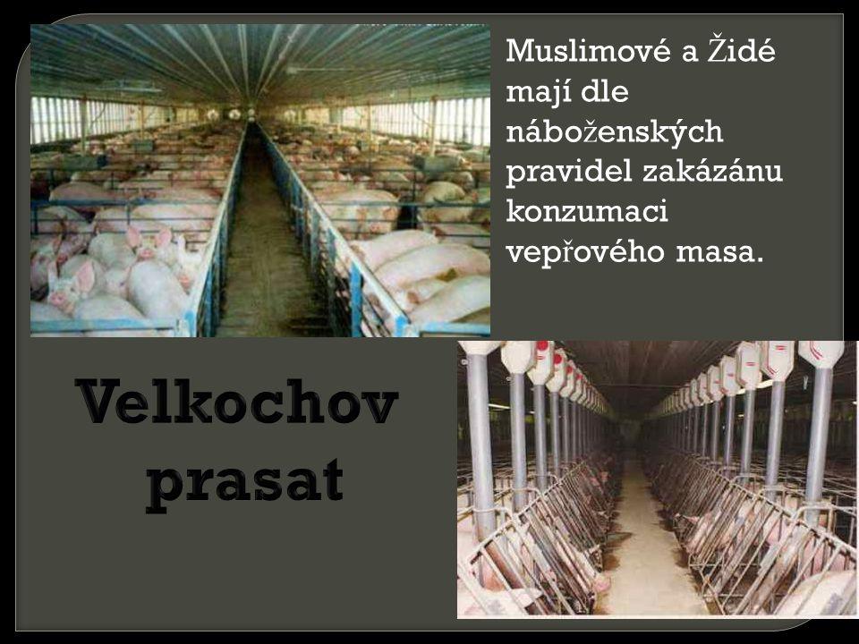 Muslimové a Židé mají dle náboženských pravidel zakázánu konzumaci vepřového masa.