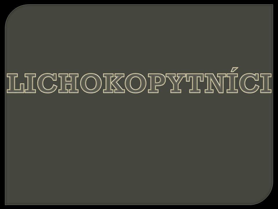 LICHOKOPYTNÍCI