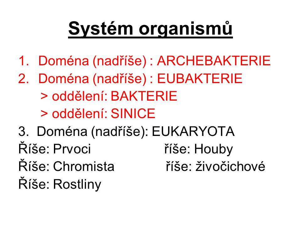 Systém organismů Doména (nadříše) : ARCHEBAKTERIE