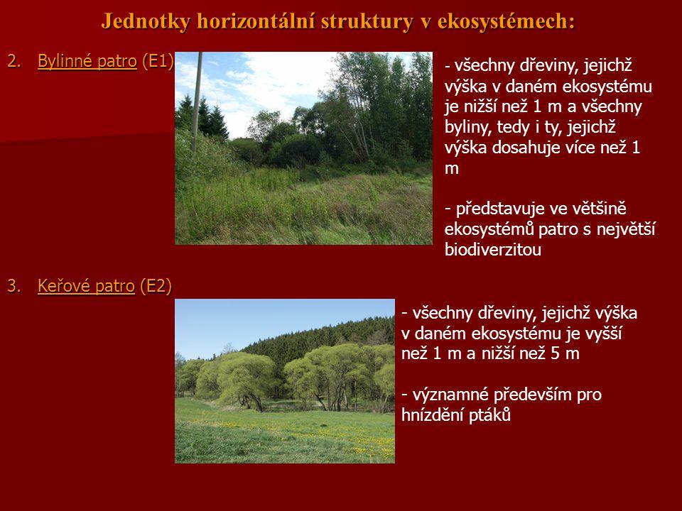 Jednotky horizontální struktury v ekosystémech: