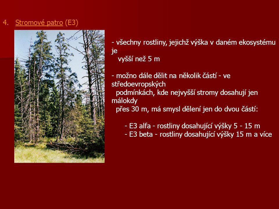 4. Stromové patro (E3) všechny rostliny, jejichž výška v daném ekosystému je. vyšší než 5 m.