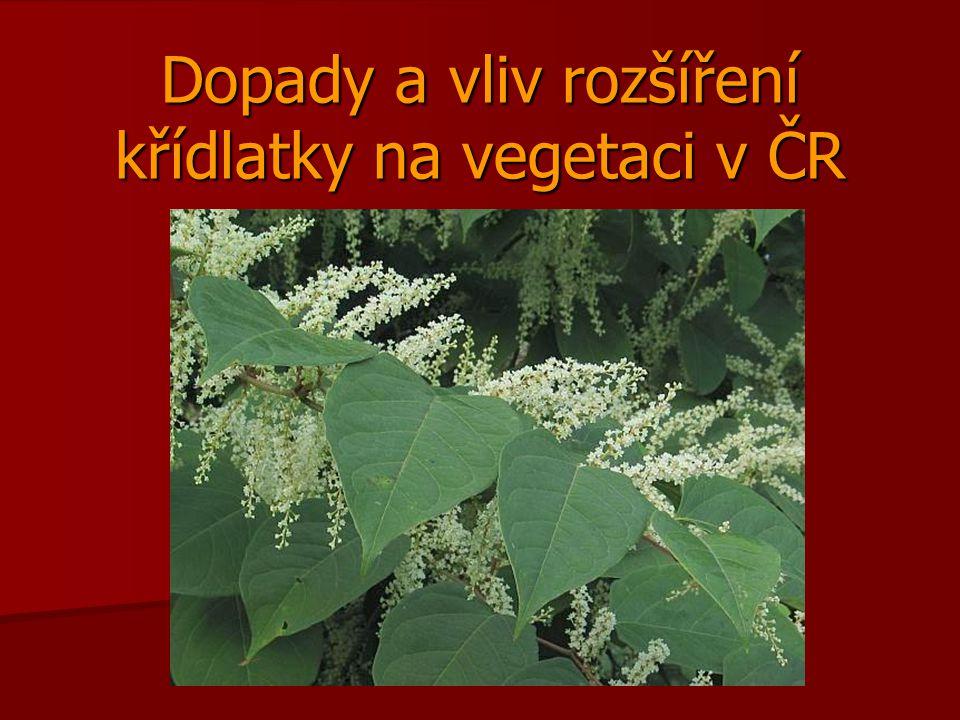 Dopady a vliv rozšíření křídlatky na vegetaci v ČR