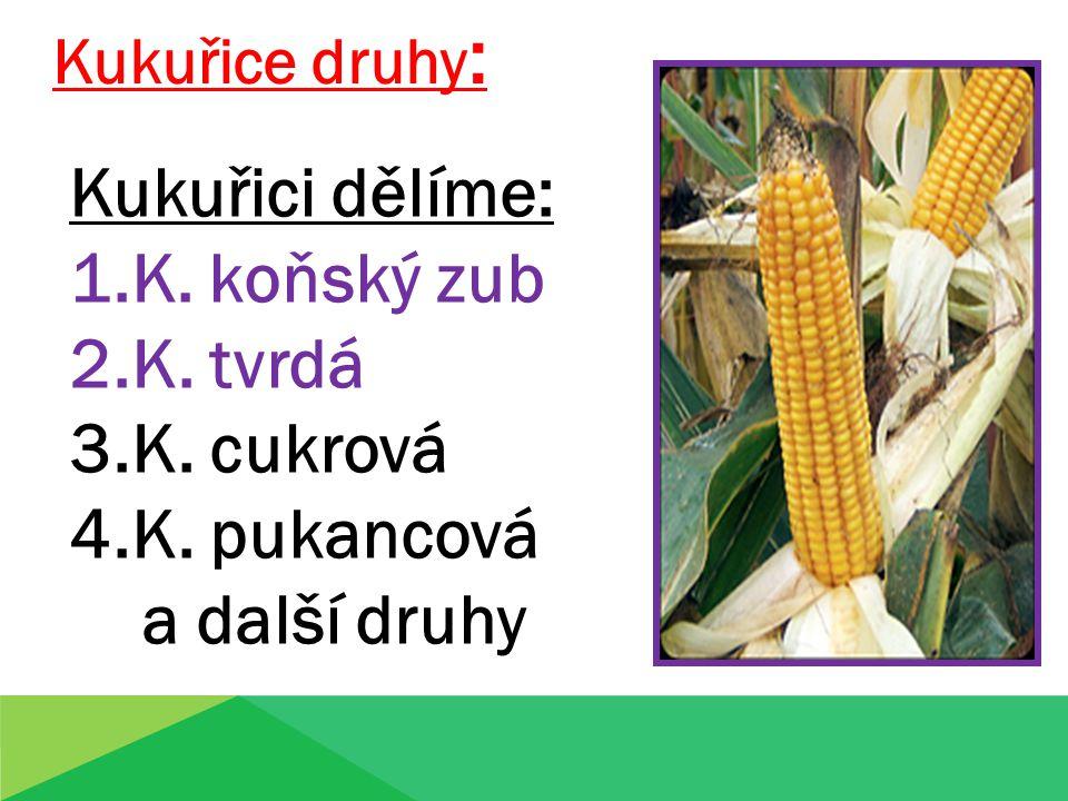 Kukuřici dělíme: 1.K. koňský zub 2.K. tvrdá 3.K. cukrová