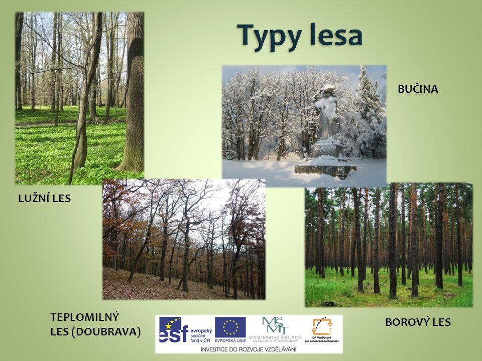 Typy lesa BUČINA LUŽNÍ LES TEPLOMILNÝ LES (DOUBRAVA) BOROVÝ LES