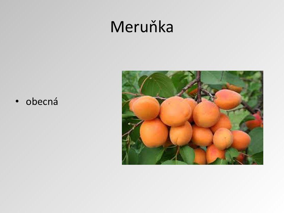 Meruňka obecná